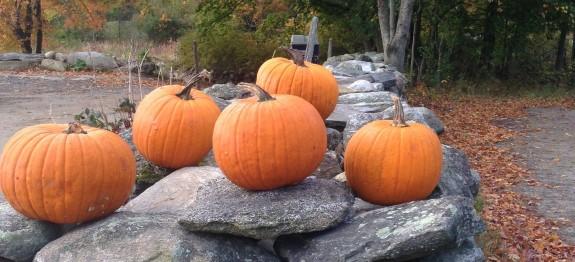 pumpkins clark farm